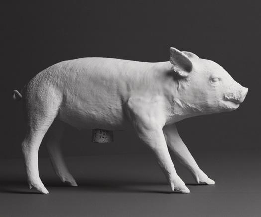 HA_Pig